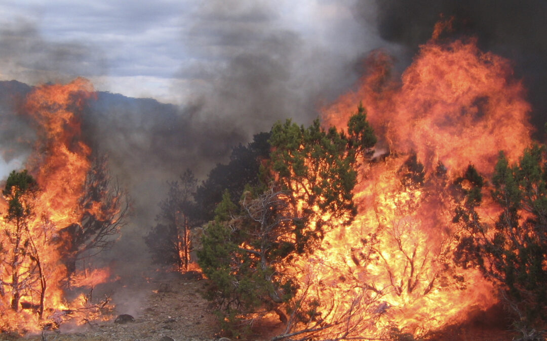 Wildfire and SageSTEP Research: an inevitable collision