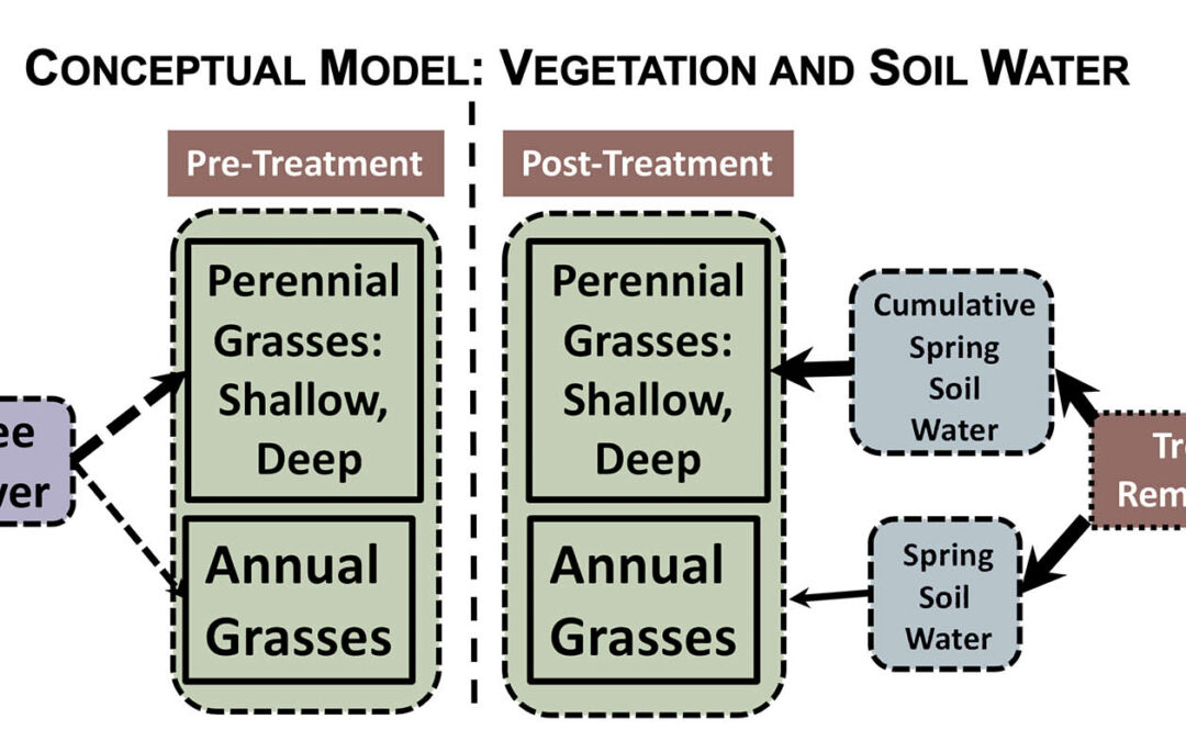 Tree Removal and Grass Response: Linking Vegetation with Available Soil Water